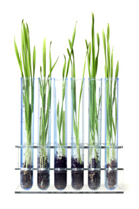 Glass tubes containing lemongrass relating to the science behind our natural mosquito repellents.